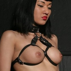 Adjustable Leather Collar and Brassiere Harness
